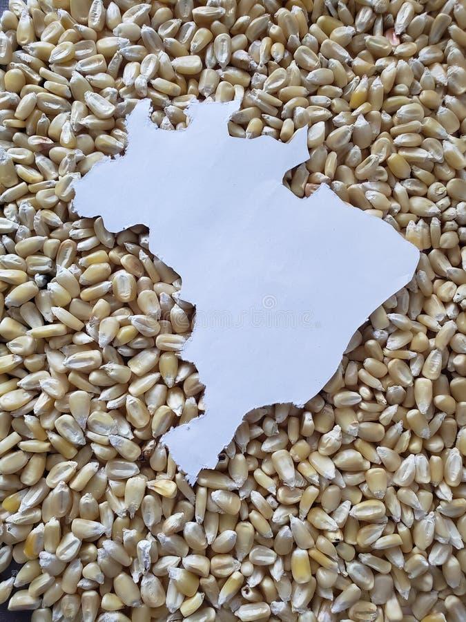mapa do território de Brasil no branco e no fundo com grões do milho fotografia de stock royalty free