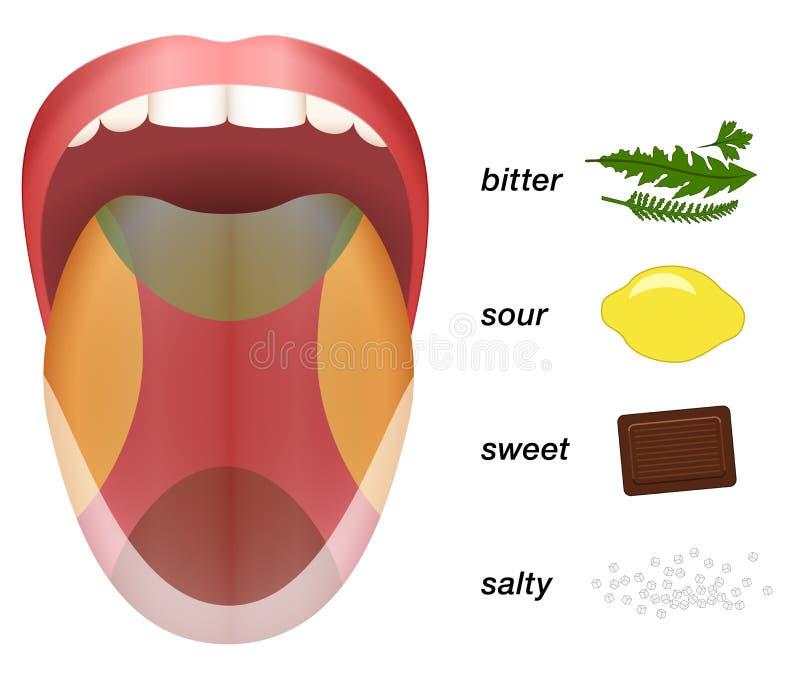 Mapa salado dulce amargo amargo del gusto de la lengua stock de ilustración