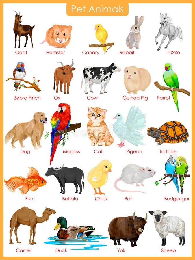 Mapa zwierząt domowych zwierzęta ilustracji