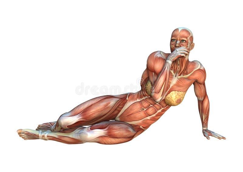mapas do músculo da rendição 3D ilustração royalty free