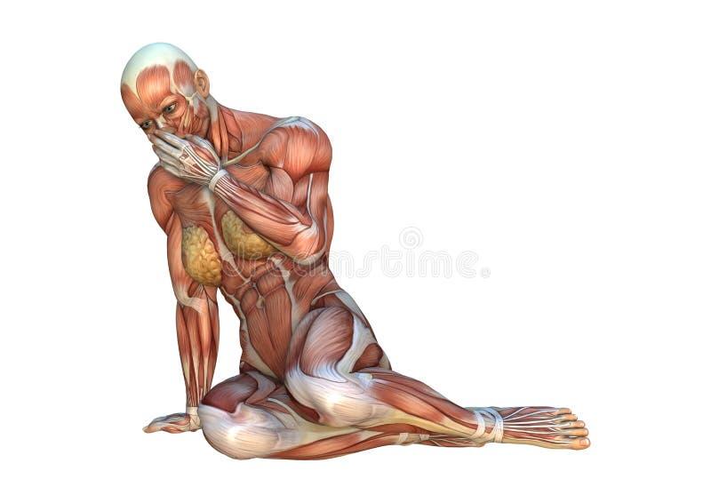 mapas do músculo da rendição 3D ilustração do vetor
