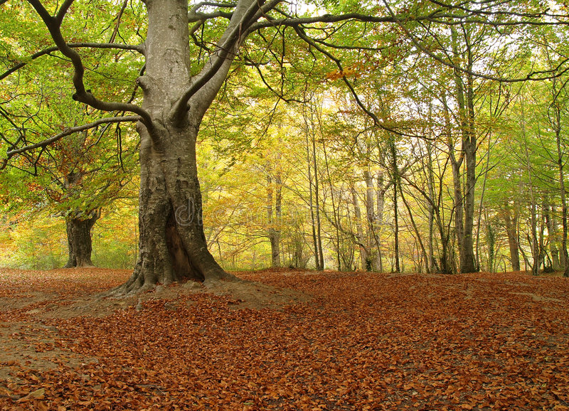 Download Maple alley stock image. Image of deciduous, prospect - 1522667
