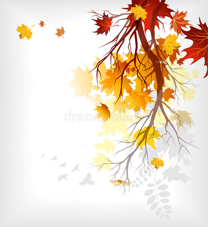 Maple autumn leaves stock illustration