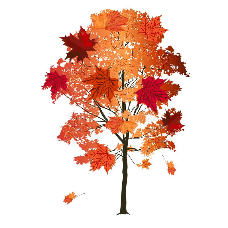 Maple with big red leaves, in autumn royalty free stock photo
