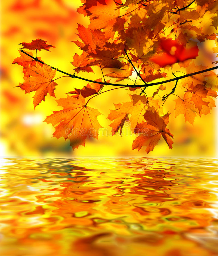 Download Maple Branch With Fall Leaves Stock Illustration - Image: 11296401
