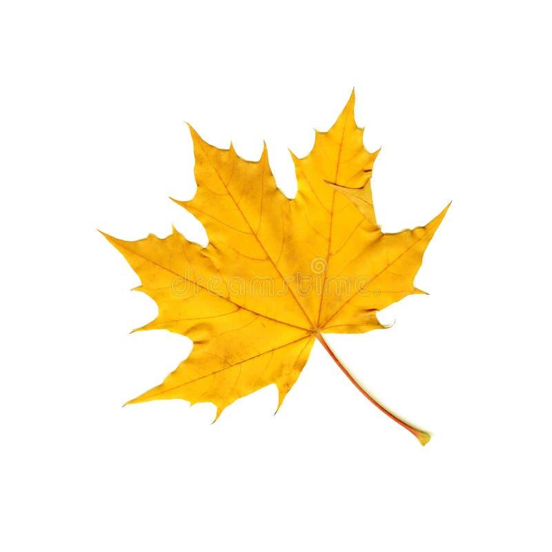 Download Maple Leaf stock image. Image of trees, leaf, scan, tree - 3394931