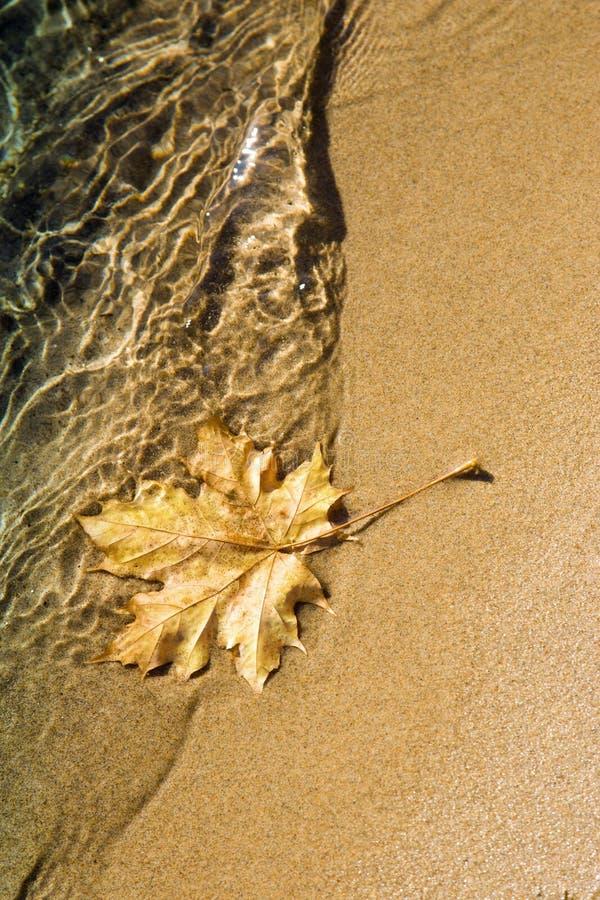 Free Maple Leaf At Lake Shoreline Stock Image - 3610401