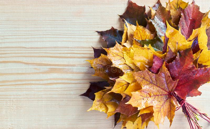 Maple leaf autumn bouquet  on wooden background. Flat lay, overhead top view, closeup, copy space, fall and back to school concept stock image