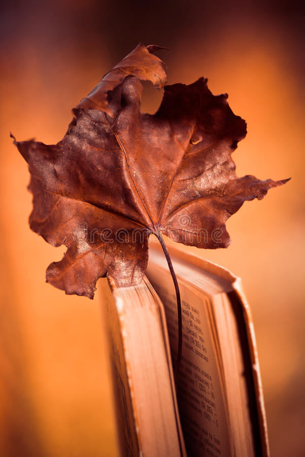 Maple leaf in book stock images