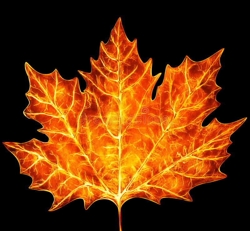 Maple leaf burning hot. Maple leaf colored in burning hot tones. Isolated on black background. Collage picture stock illustration