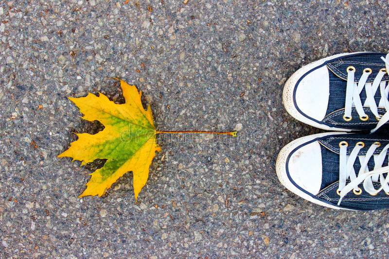 Maple leaf with converse royalty free stock images