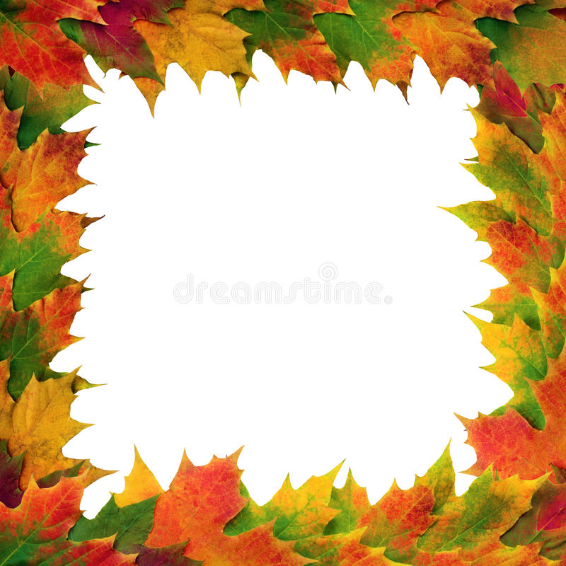 Maple Leaf Frame. Maple leaves in autumn forming a border, over white background royalty free stock photos