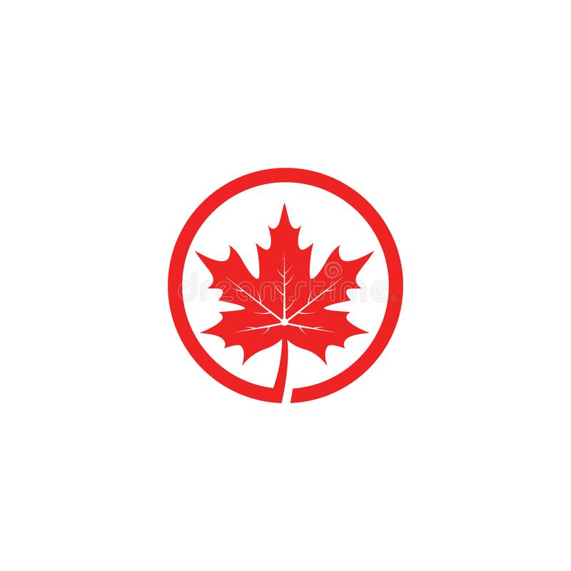 Maple leaf logo template vector icon illustration. In flat design, canada, canadian, white, isolated, nature, art, tree, background, symbol, element, red, color stock illustration