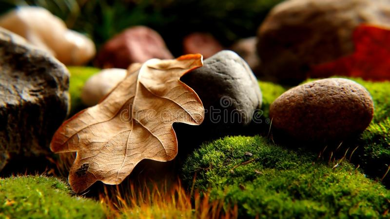 Maple leaf and nut on moss stock photography