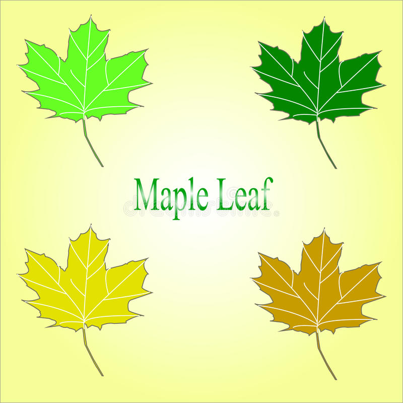 Maple leaf in red, yellow, orange, and green colors. vector illustration
