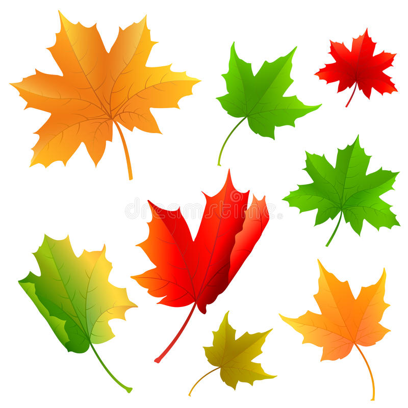 Download Maple Leaf stock vector. Image of colorful, november - 33554936