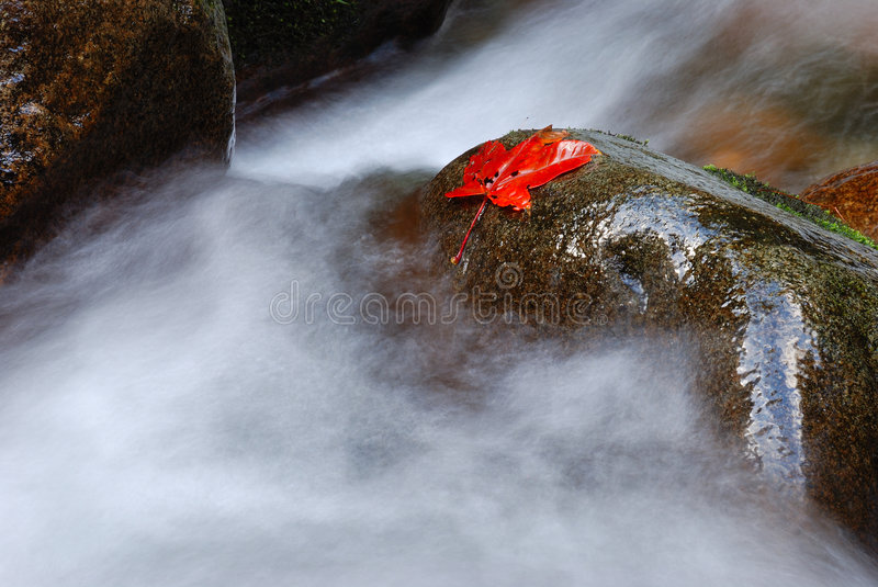 Download Maple leaf on wet rock stock image. Image of nature, waterfall - 7041779
