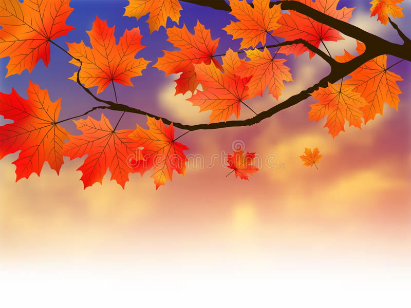 Maple Leafs On Sunset Royalty Free Stock Images
