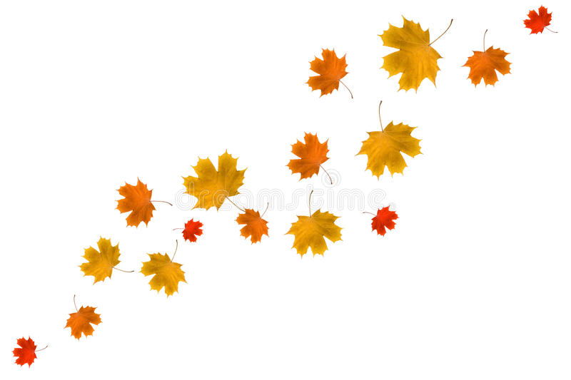 Download Maple leaves stock image. Image of color, leaf, image - 16691213