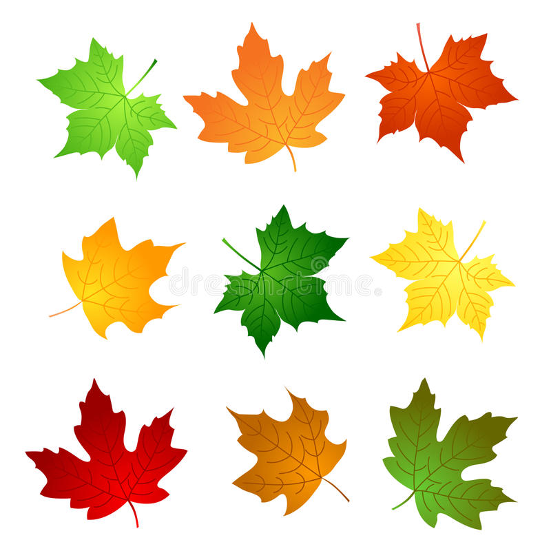 Download Maple leaves stock vector. Image of fall, canadian, leaves - 24252979