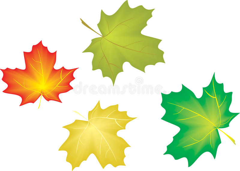 Download Maple leaves stock vector. Image of flag, beauty, proud - 6685349