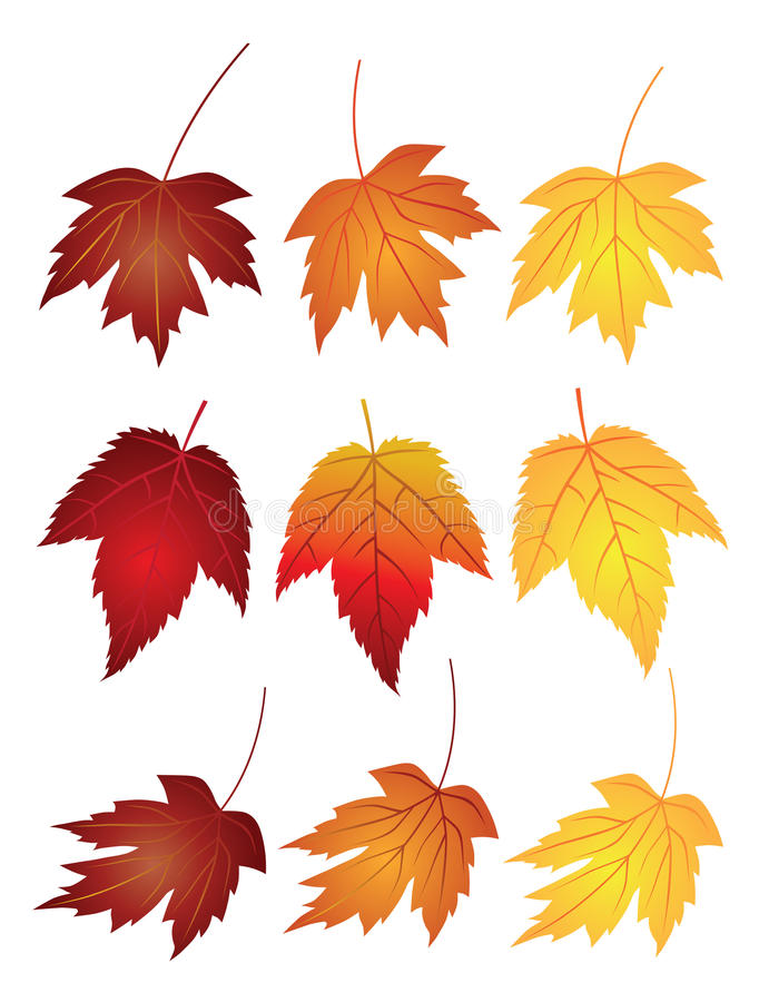 Maple Leaves in Fall Colors Vector Illustration. Maple Leaves in Changing Fall Colors on White Background Vector Illustration royalty free illustration