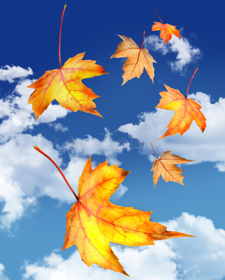 Free Maple Leaves Falling Against A Blue Sky Royalty Free Stock Photos - 6789278
