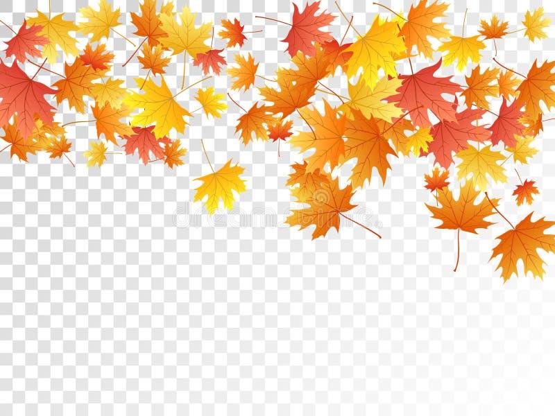 Maple leaves vector illustration, autumn foliage on transparent background. royalty free illustration