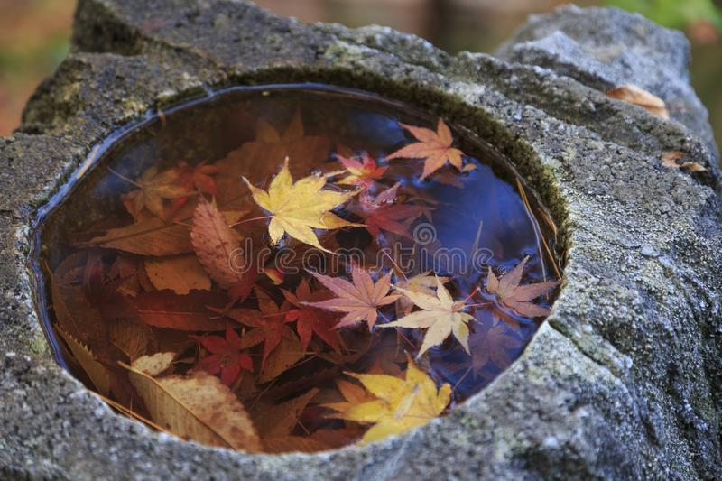 Maple leaves on water in a stone basin, in Japan. Maple leaves on water in a stone basin, in Kyushu Japan stock image