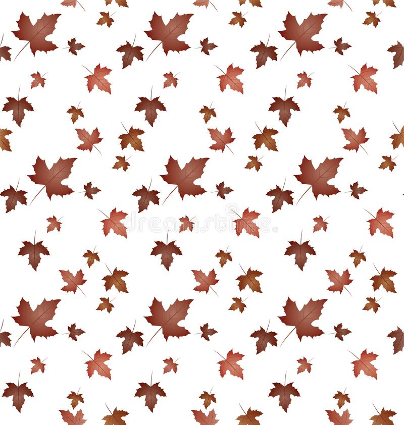 Maple plant leaves pattern-02 royalty free stock images
