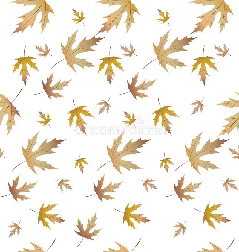 Maple plant leaves pattern-01 stock photography