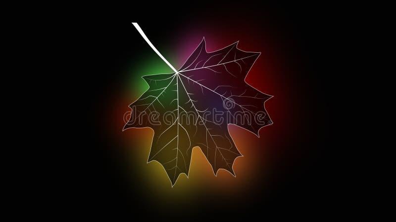 Maple silhouette stock image