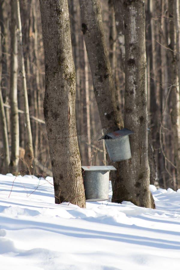Maple Sugar Taps in Snow stock photos