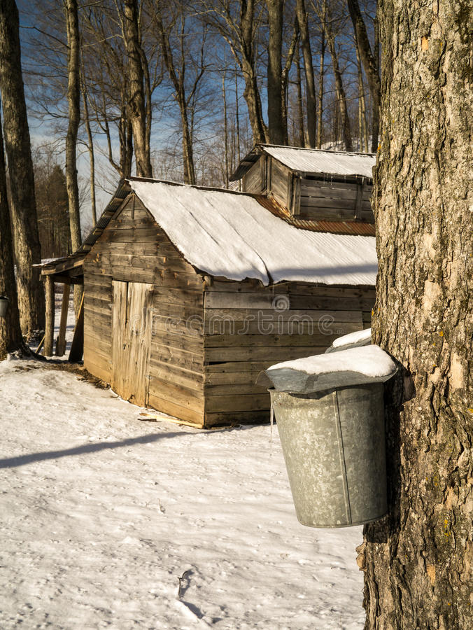 Free Maple Sugaring Season - Sugar House And Pails Royalty Free Stock Photography - 29834187