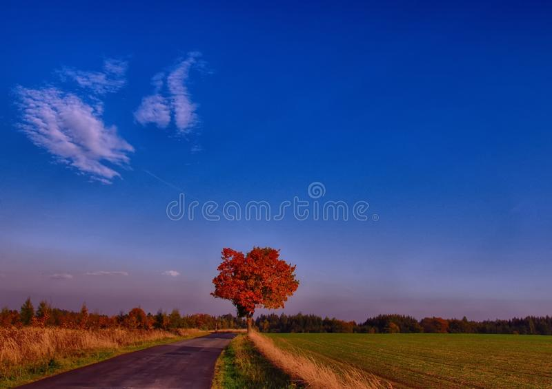 Maple tree with coloured leafs along asphalt road at autumn/fall daylight. Countryside landscape, sunlight,blue sky. Czech Republic,Europe. HDR image royalty free stock photography