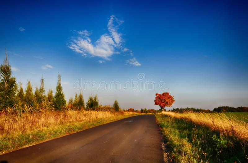 Maple tree with coloured leafs along asphalt road at autumn/fall daylight. Countryside landscape, sunlight,blue sky. Czech Republic,Europe. HDR image stock photo