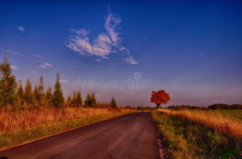 Maple tree with coloured leafs along asphalt road at autumn/fall daylight. Countryside landscape, sunlight,blue sky. Czech Republic,Europe. HDR image royalty free stock photo