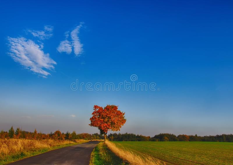 Maple tree with coloured leafs along asphalt road at autumn/fall daylight. Countryside landscape, sunlight,blue sky. Czech Republic,Europe. HDR image stock image