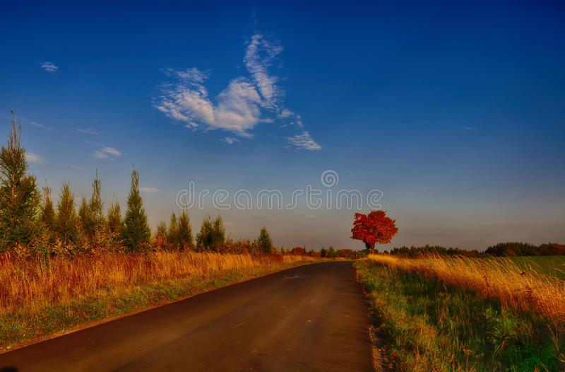 Maple tree with coloured leafs along asphalt road at autumn/fall daylight. Countryside landscape, sunlight,blue sky. Czech Republic,Europe. HDR image royalty free stock photos