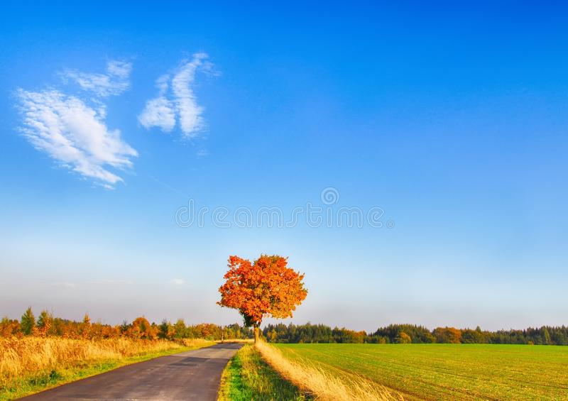 Maple tree with coloured leafs along asphalt road at autumn/fall daylight. Countryside landscape, sunlight,blue sky. Czech Republic,Europe. HDR image stock photos