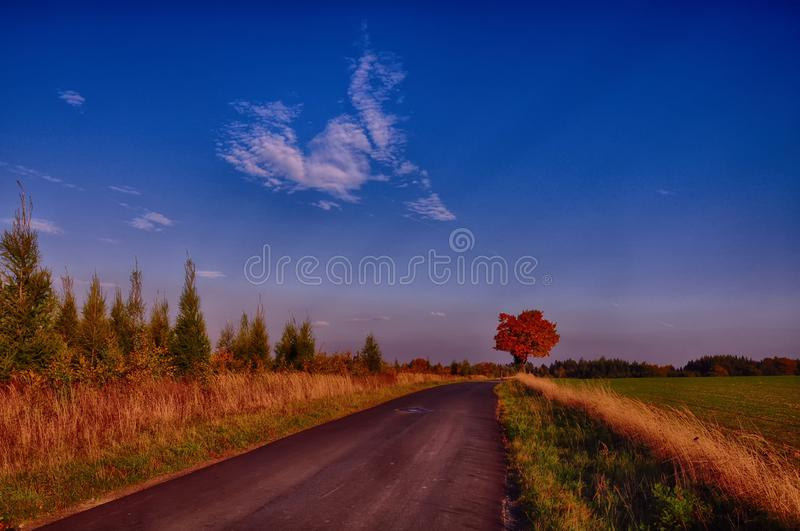 Maple tree with coloured leafs along asphalt road at autumn/fall daylight. Countryside landscape, sunlight,blue sky. Czech Republic,Europe. HDR image stock photography
