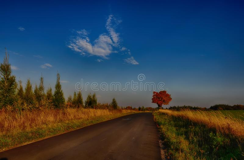 Maple tree with coloured leafs along asphalt road at autumn/fall daylight. Countryside landscape, sunlight,blue sky. Czech Republic,Europe. HDR image royalty free stock images