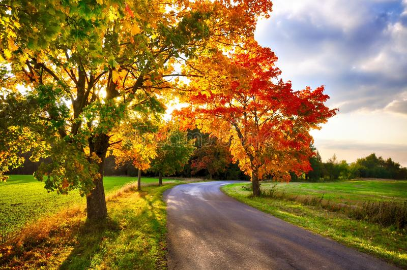 Maple tree with coloured leafs and asphalt road at autumn/fall daylight. Relaxing atmosphere. Countryside landscape stock photo