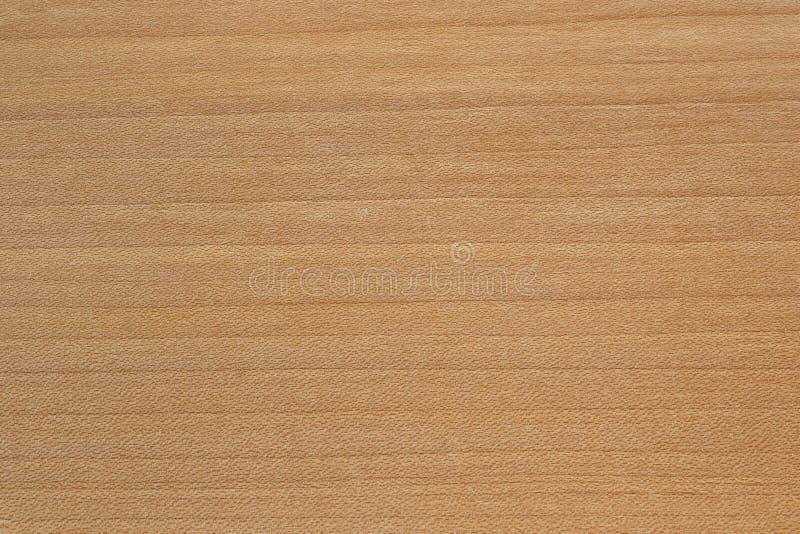 Maple tree wood texture royalty free stock photo