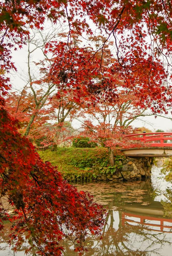 Lake scenery at autumn in Kyoto, Japan. Maple trees at autumn in the botanic garden stock photos
