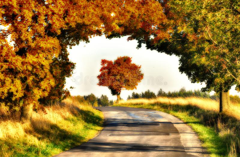 Maple trees with coloured leafs along asphalt road at autumn/fall daylight. Countryside landscape, sunlight,blue sky. Czech Republic,Europe. HDR image royalty free stock photos