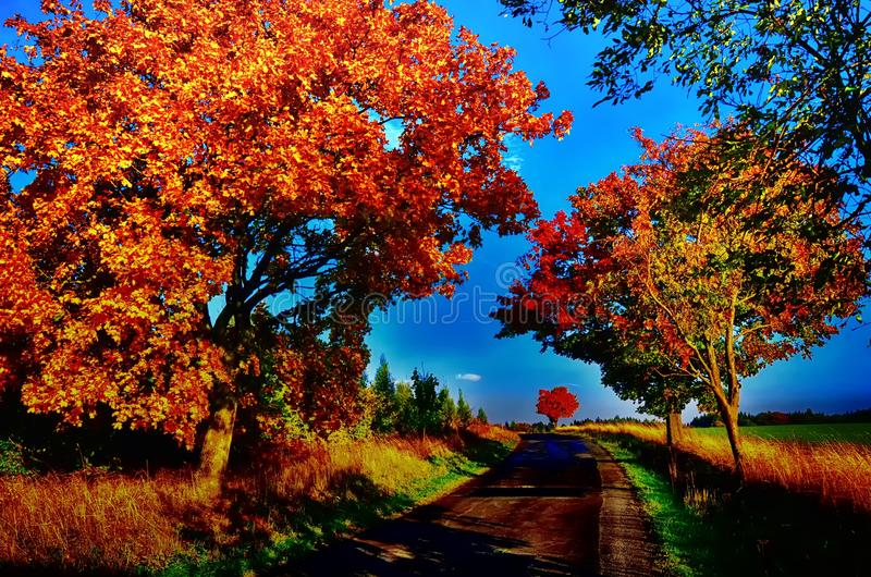 Maple trees with coloured leafs along asphalt road at autumn/fall daylight. Countryside landscape, sunlight,blue sky. Czech Republic,Europe. HDR image stock photos
