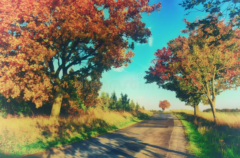 Maple trees with coloured leafs along asphalt road at autumn/fall daylight. Countryside landscape, sunlight,blue sky. Czech Republic,Europe. HDR image royalty free stock photo