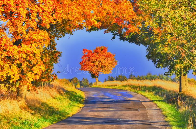 Maple trees with coloured leafs along asphalt road at autumn/fall daylight. Countryside landscape, sunlight,blue sky. Czech Republic,Europe. HDR image stock image