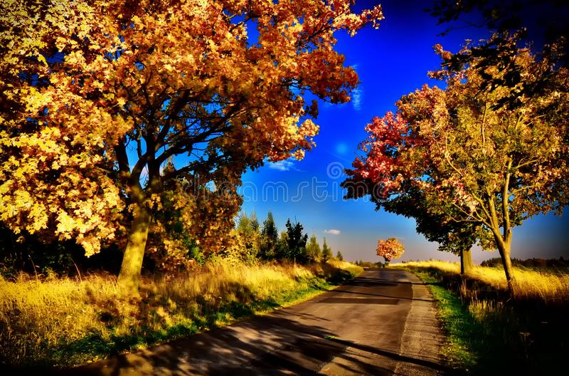 Maple trees with coloured leafs along asphalt road at autumn/fall daylight. Countryside landscape, sunlight,blue sky. Czech Republic,Europe. HDR image royalty free stock images